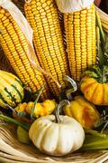 Autumn corn and gourds Stock Photos