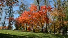 The trees in autumn colors in Mezhigirya Stock Footage