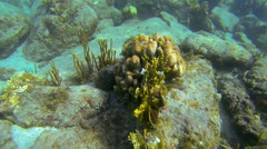 diving down to coral and fish - stock footage