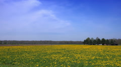 Driving by flowering pasture in early spring Stock Footage