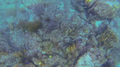 Fish at play near the reef Stock Footage