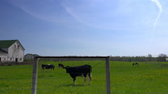 Driving by livestock grazing on small rural farm Stock Footage