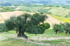 summer landscape in umbria (italy) - stock photo
