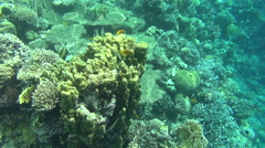 Colorful fishes on reef 32 dahab Stock Footage