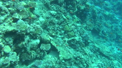 Colorful fishes on reef 33 dahab Stock Footage