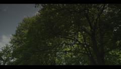 Couple of pigeons in a tree, zoom, slow motion Stock Footage