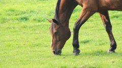 Horse feeding in the meadow Stock Footage