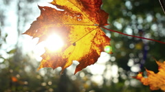 Leaf fall in the autumn city park Stock Footage