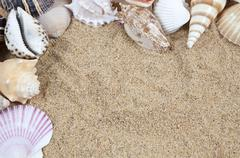 Nice sea shells on the sandy beach taken closeup, shell border or frame Stock Photos