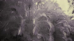 palm in an infrared color - stock footage