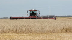 Swather cutting wheat. Stock Footage