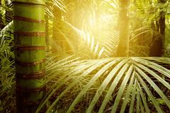 Sunlight shining in tropical jungle Stock Photos