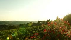 Beautiful Tuscany Landscape Nature Vineyard Summer Wine Concept Stock Footage