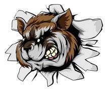 raccoon sports mascot breakthrough - stock illustration