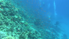 Divers on the reef 02 dahab Stock Footage