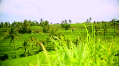 Stock Video Footage of rice terraces