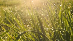 Green grass. Nice day. Sunshine and light air. - stock footage