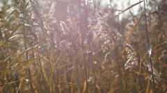 Wild grasses. Nice autumn day. Stock Footage