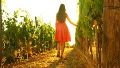 Sunset at  Vineyard Woman Red Dress Walking Wine Grape Harvest Stock Footage