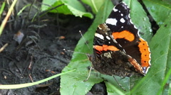 Close up on an black and orange butterfly Stock Footage
