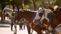 Horses for carriages Stock Footage