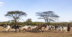 turmi, omo valley, ethiopia - december 30, 2013: unidentified people prepare - stock photo