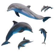 Jumping dolphins on white Kuvituskuvat