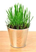 Green wheat grass in the aluminum pot Stock Photos