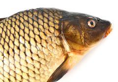 carp dietary fish - stock photo