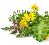 Beautiful wildflowers, yellow chamomiles, milfoil Stock Photos