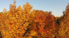 Autumn Fall Tree Tops Stock Footage
