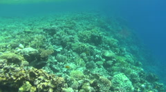 Colorful fishes on reef 39 dahab Stock Footage