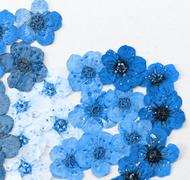 decorative montage compilation of colorful dried spring flowers (blue) - stock photo