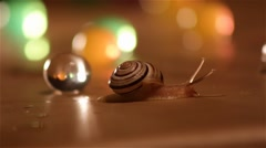 Snail Crawling on a Colorful background. Close up. - stock footage