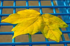 autumnal painted leaf on a blue grid of a seat - stock photo