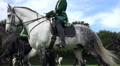 Classic cavalry big quadrille closeup low angle dapple-gray horse HD Footage