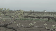 spring vineyard - stock footage