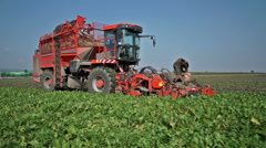 Editorial: beet harvest Stock Footage