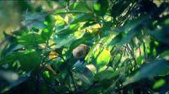 Snail on the tree Stock Footage