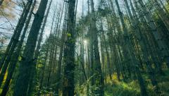 4K beautiful magic forest with sunbeams shining Stock Footage