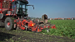 Editorial:harvester working on beet field Stock Footage
