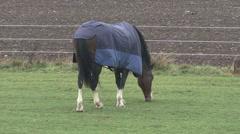 Horse graze in rain wearing a wet rug. Stock Footage
