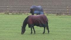 Horses graze in light rain. Stock Footage