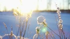 Snowdrift with dry grass close-up - stock footage