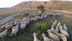 Aerial view of grazing animals-sheep, goats on fertile land - stock footage