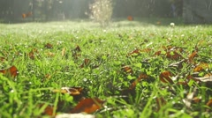 Leaves and morning dew drop falling on the meadow in slow motion Stock Footage