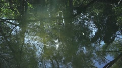 Stock Video Footage of Reflected in calm river.Trees overhanging the water