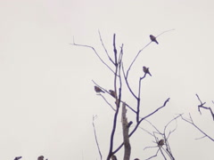 Goldfinches on a branch Stock Footage