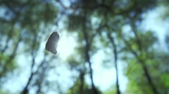 Leaf dancing in slow motion background with sun and trees Stock Footage