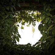 Creeper plant window, center isolated on white - stock photo